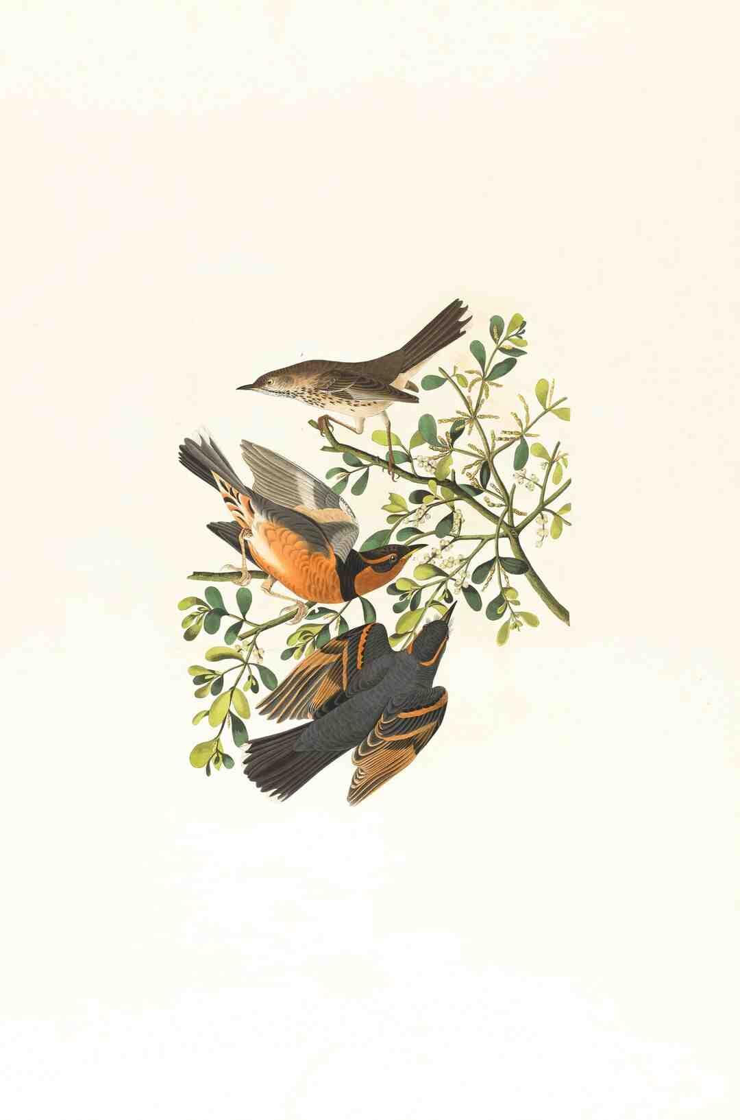 Comment les oiseaux entendent