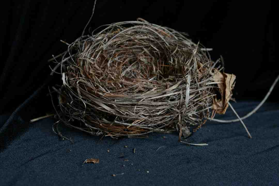 Comment les oiseaux font leur nid