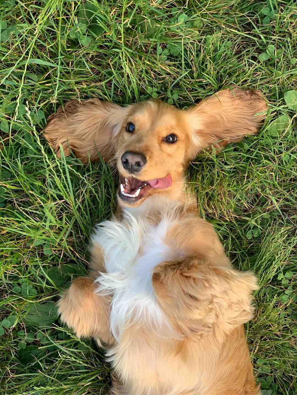 Comment savoir si mon chien a des troubles du comportement ?