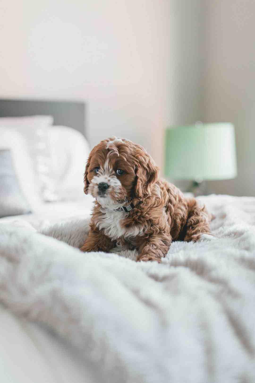 Quelle est l'odeur que les chiens détestent ?